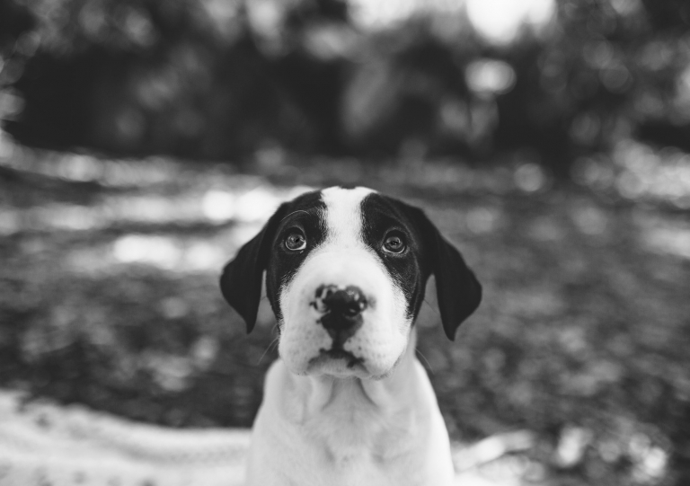 puppy family photographer lifestyle portraits Hyggelig Photography